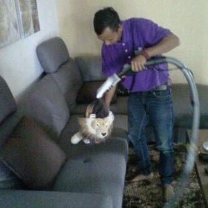 usaha cuci sofa